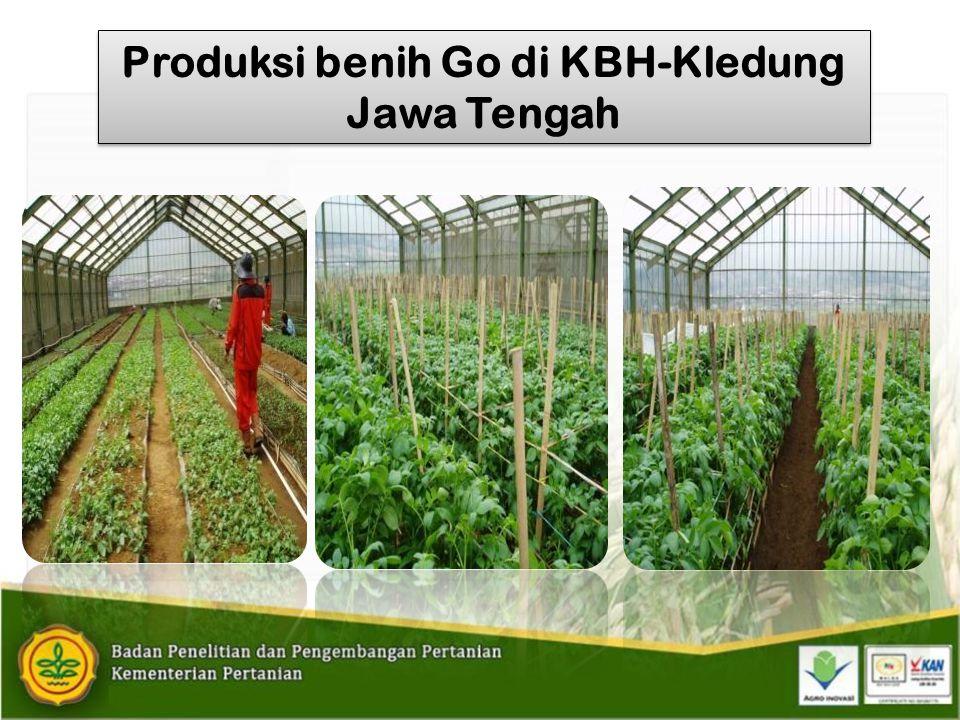 Produksi benih Go di KBH-Kledung Jawa Tengah