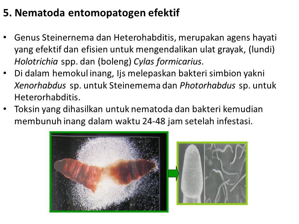 5. Nematoda entomopatogen efektif • Genus Steinernema dan Heterohabditis, merupakan agens hayati yang efektif dan efisien untuk mengendalikan ulat gra