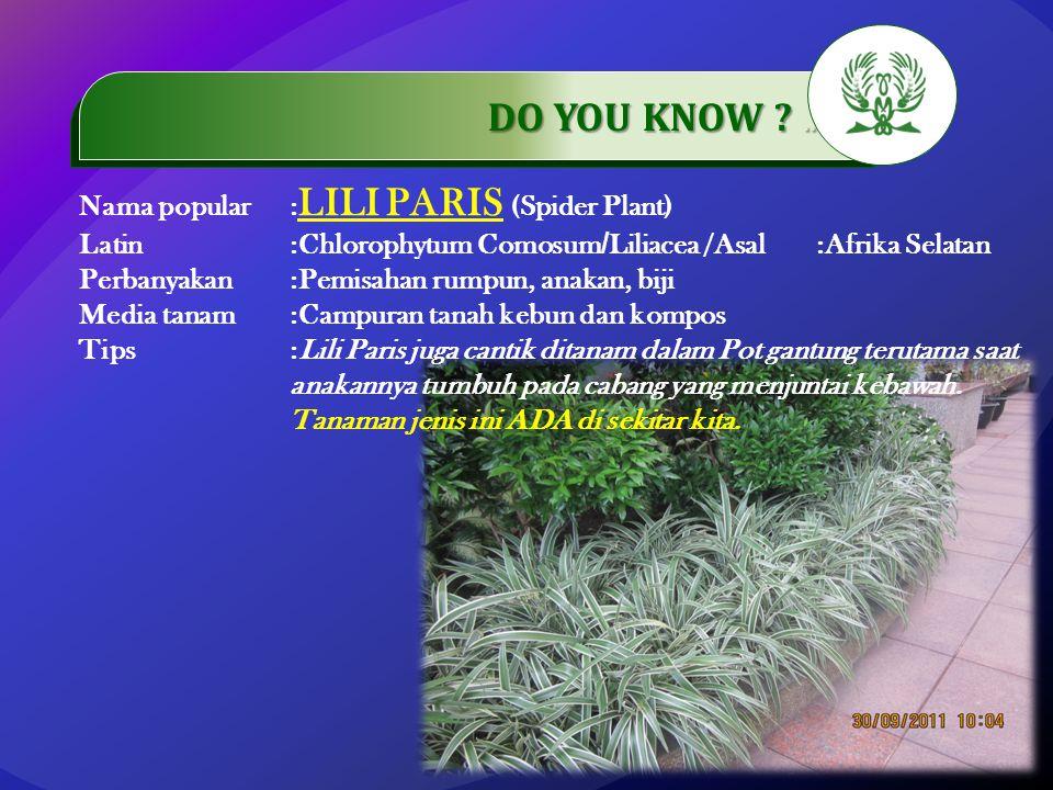 .…………… DO YOU KNOW ?..…………… Nama popular: LILI PARIS (Spider Plant) Latin:Chlorophytum Comosum / Liliacea /Asal:Afrika Selatan Perbanyakan:Pemisahan r