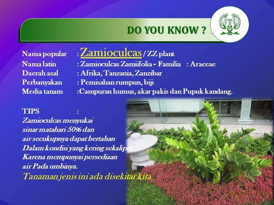.…………… DO YOU KNOW ?..…………… Nama popular: Zamioculcas / ZZ plant Nama latin: Zamioculcas Zamiifolia - Familia: Araceae Daerah asal: Afrika, Tanzania,