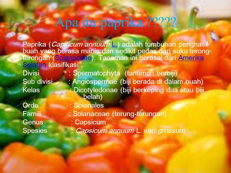 Apa itu paprika ????? Paprika (Capsicum annuum L.) adalah tumbuhan penghasil buah yang berasa manis dan sedikit pedas dari suku terong- terongan (Sola