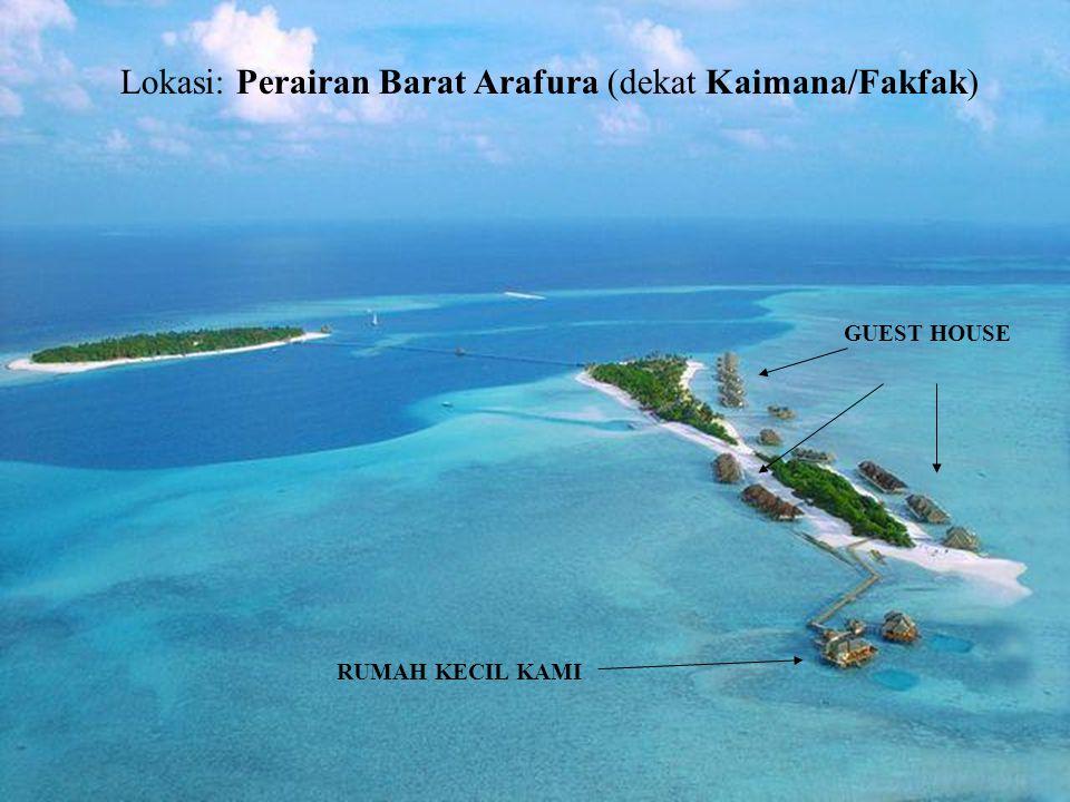 Lokasi: Perairan Barat Arafura (dekat Kaimana/Fakfak) GUEST HOUSE RUMAH KECIL KAMI