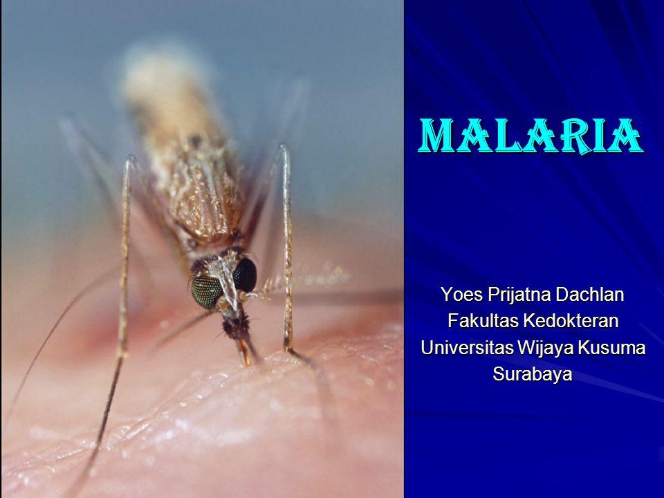 MALARIA Yoes Prijatna Dachlan Fakultas Kedokteran Universitas Wijaya Kusuma Surabaya