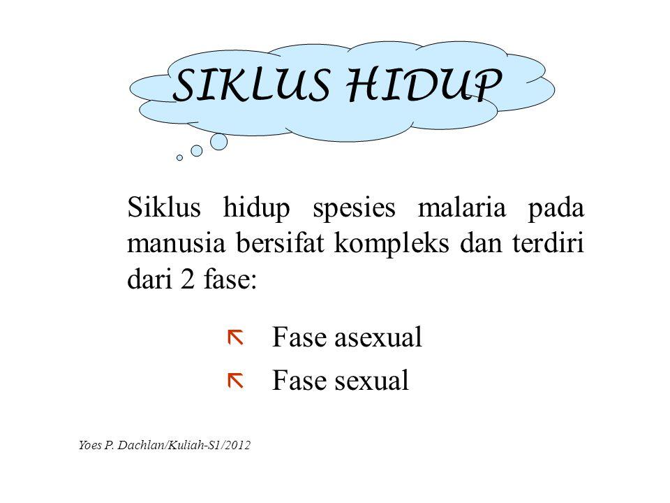 SIKLUS HIDUP ã Fase asexual ã Fase sexual Siklus hidup spesies malaria pada manusia bersifat kompleks dan terdiri dari 2 fase: Yoes P. Dachlan/Kuliah-