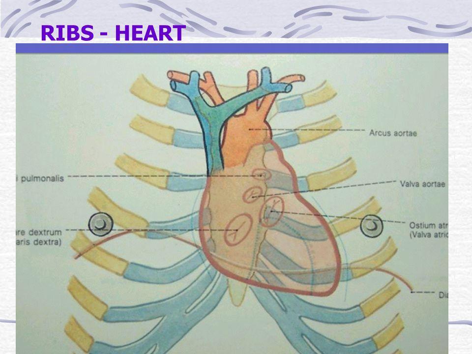 RIBS - HEART