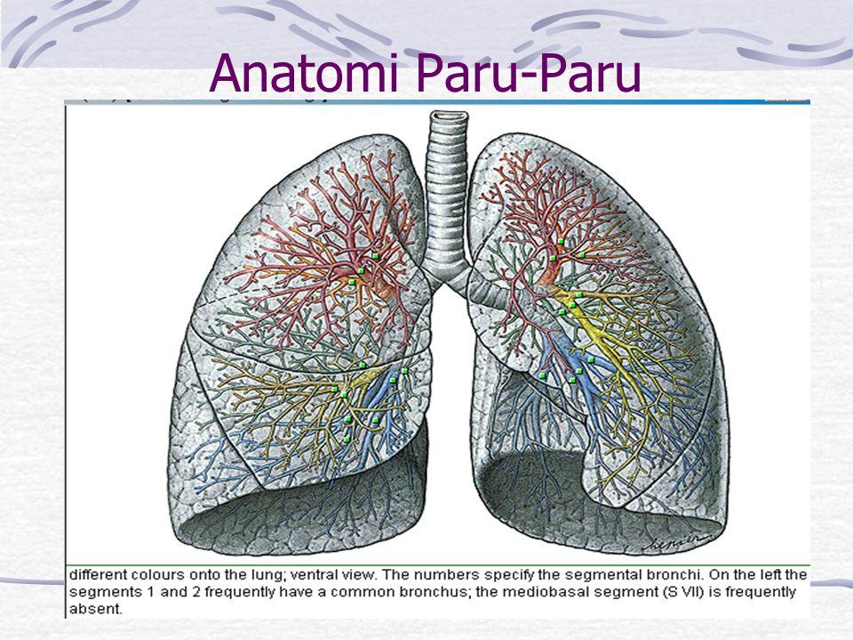 Anatomi Paru-Paru