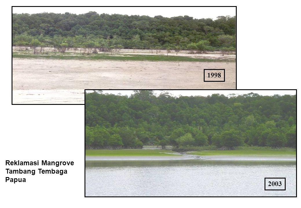 1998 2003 Reklamasi Mangrove Tambang Tembaga Papua