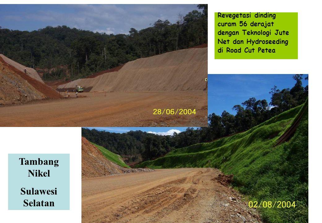 Revegetasi dinding curam 56 derajat dengan Teknologi Jute Net dan Hydroseeding di Road Cut Petea Tambang Nikel Sulawesi Selatan
