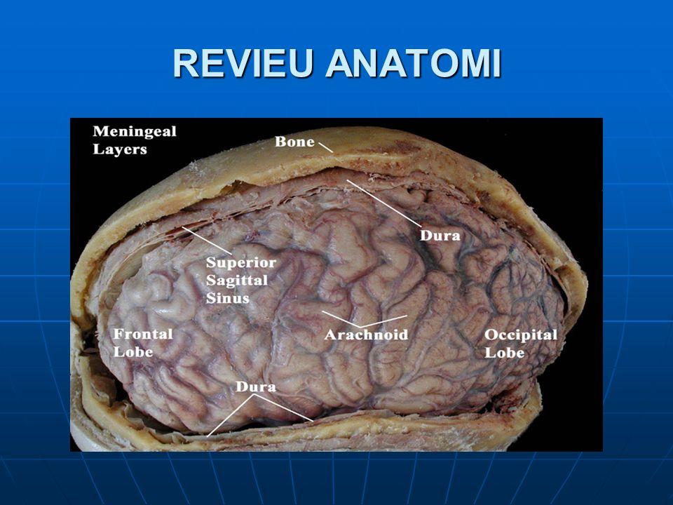 REVIEU ANATOMI