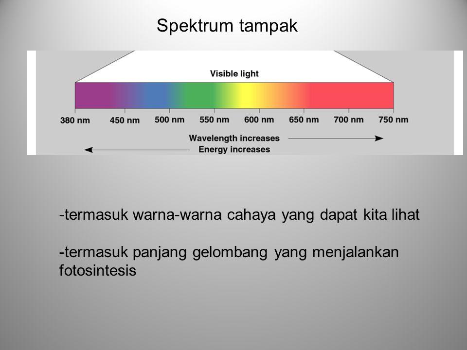 Spektrum tampak -termasuk warna-warna cahaya yang dapat kita lihat -termasuk panjang gelombang yang menjalankan fotosintesis