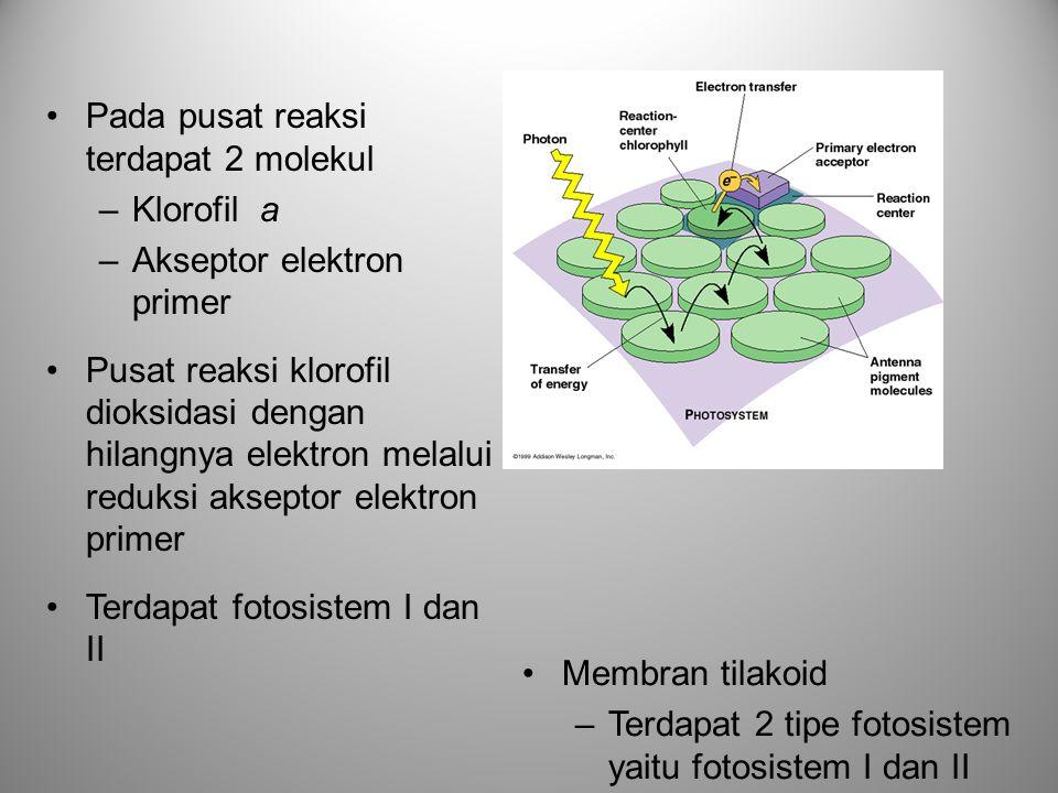 •Pada pusat reaksi terdapat 2 molekul –Klorofil a –Akseptor elektron primer •Pusat reaksi klorofil dioksidasi dengan hilangnya elektron melalui reduks