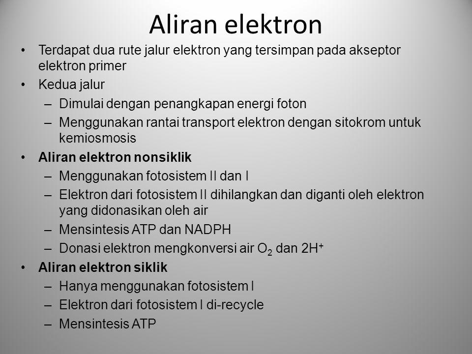 Aliran elektron •Terdapat dua rute jalur elektron yang tersimpan pada akseptor elektron primer •Kedua jalur –Dimulai dengan penangkapan energi foton –