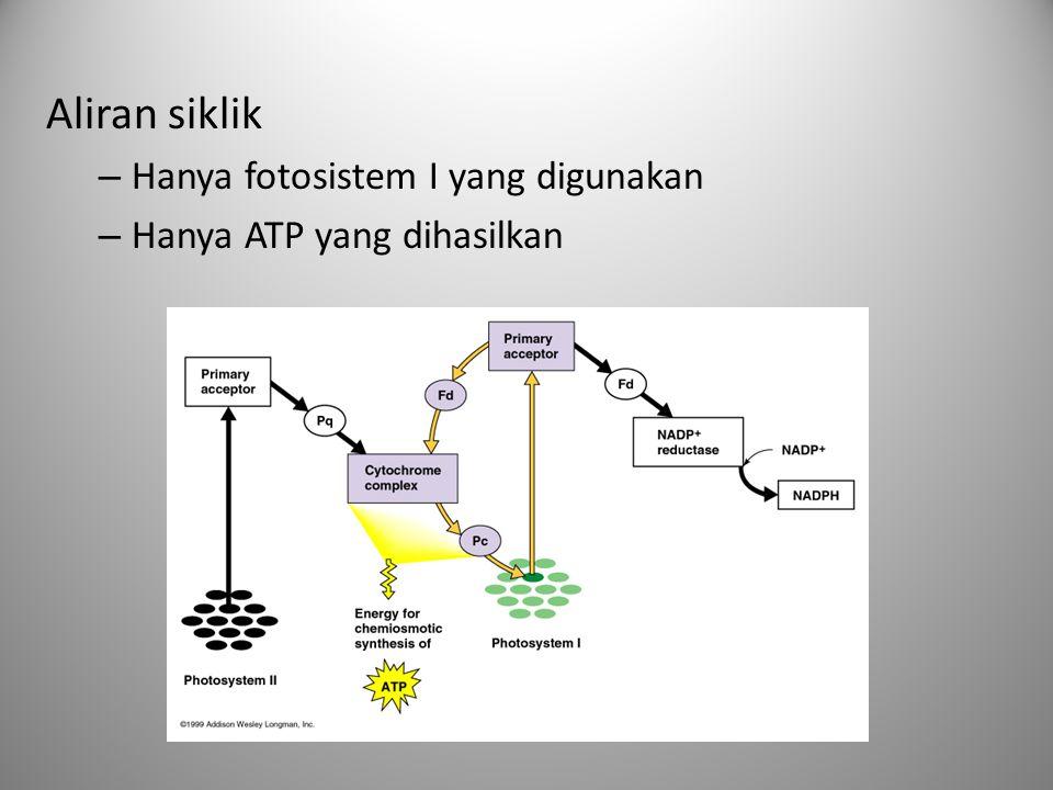 Aliran siklik – Hanya fotosistem I yang digunakan – Hanya ATP yang dihasilkan