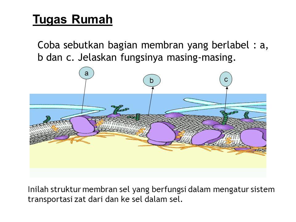 Inilah struktur membran sel yang berfungsi dalam mengatur sistem transportasi zat dari dan ke sel dalam sel. a b c Coba sebutkan bagian membran yang b