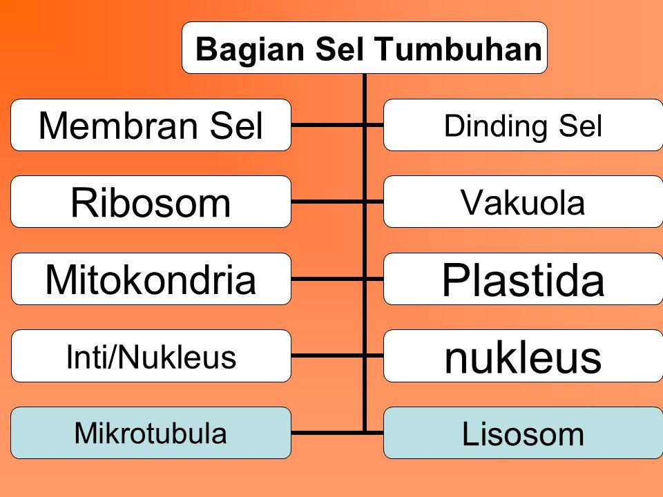 Bagian Sel Tumbuhan Membran Sel Dinding Sel RibosomVakuola MitokondriaPlastida Inti/Nukleusnukleus MikrotubulaLisosom