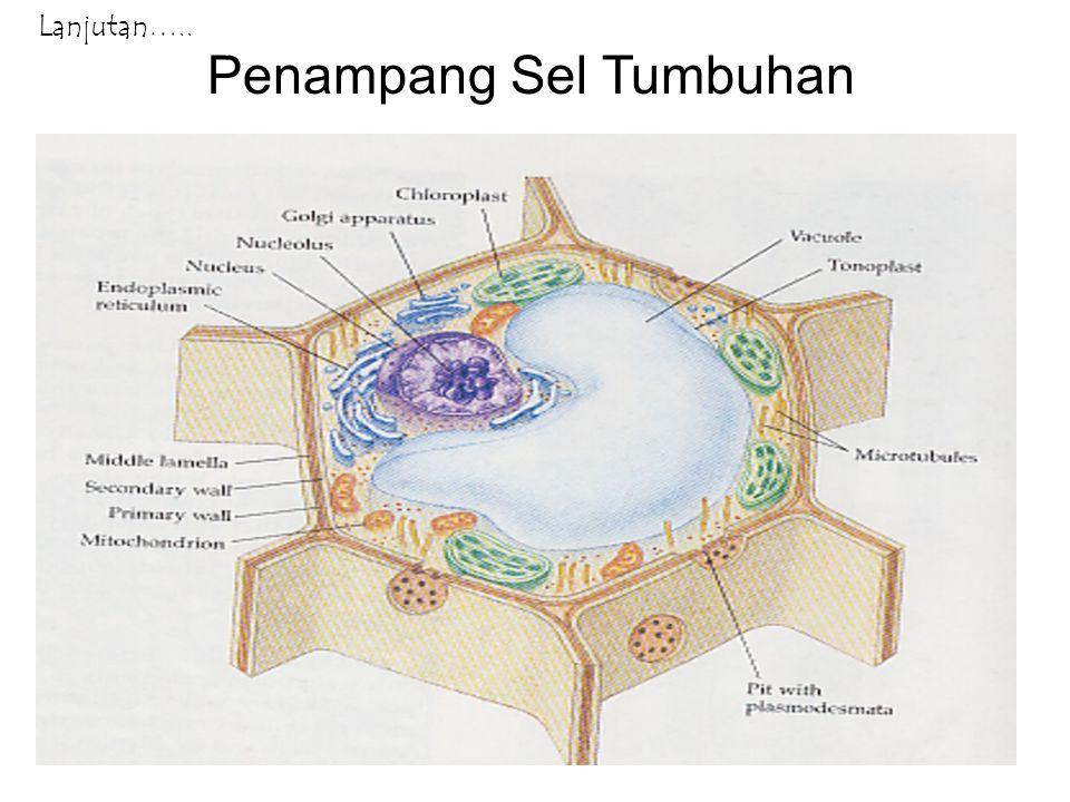 Fungsi Bagian Sel 1.Dinding sel, merupakan ciri khas sel tumbuhan yang berfungsi memberikan bentuk tetap pada sel tumbuhan karena tersusun atas selulosa; 2.