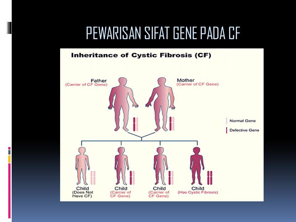 PEWARISAN SIFAT GENE PADA CF