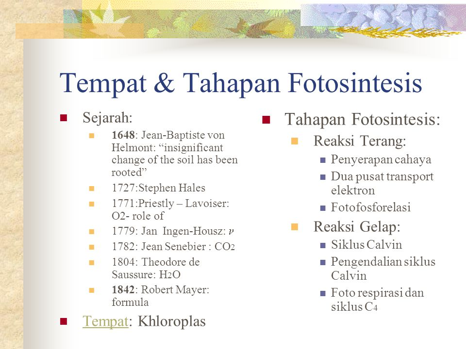 Sel & bagian-bagiannya Chloroplast