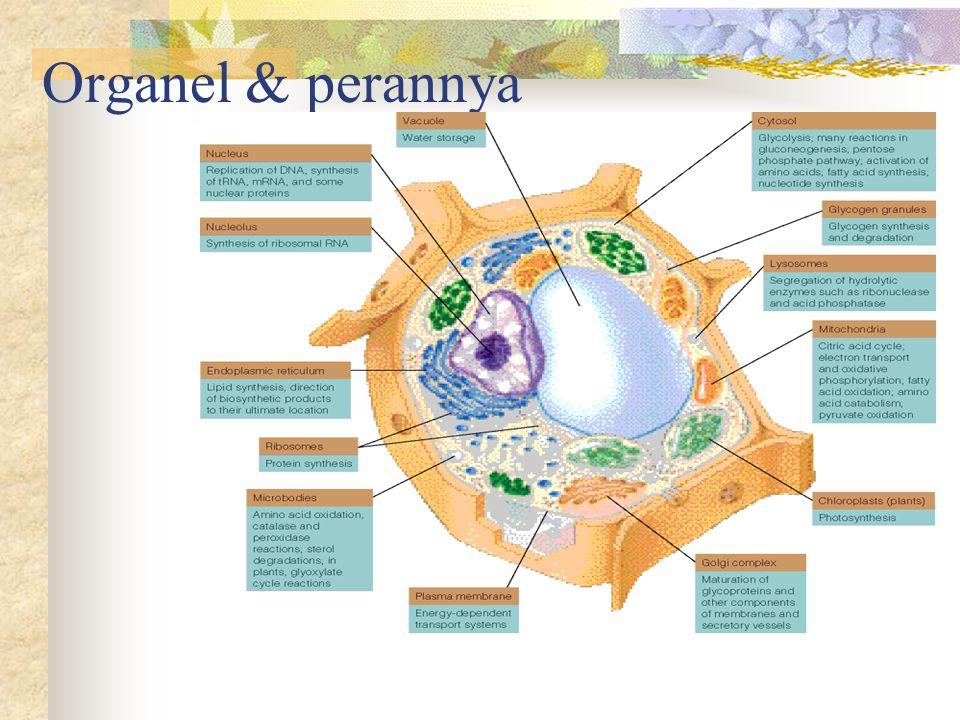 Organel & perannya