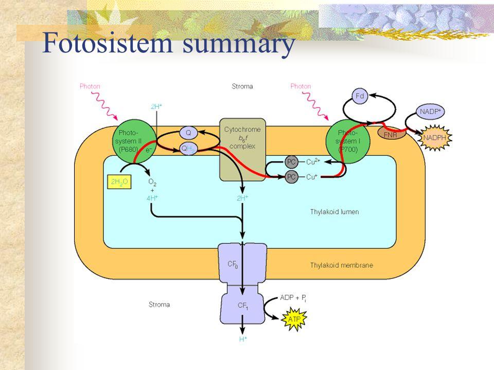 Fotosistem summary