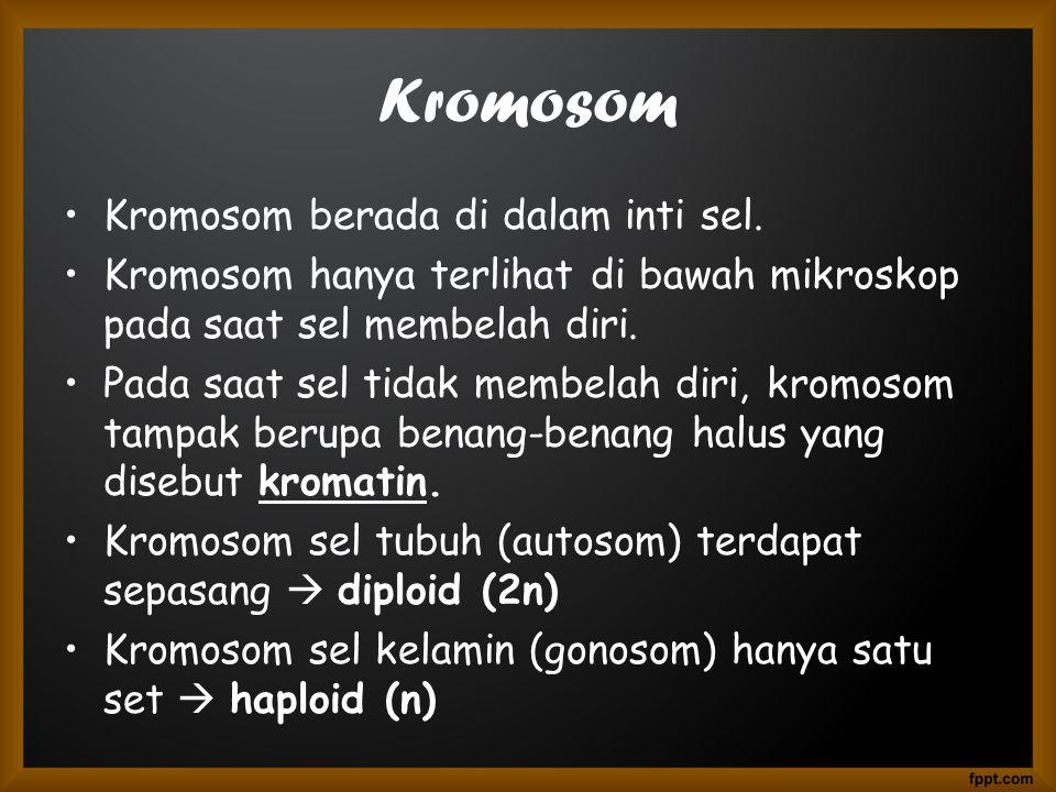 Kromosom •Kromosom berada di dalam inti sel.