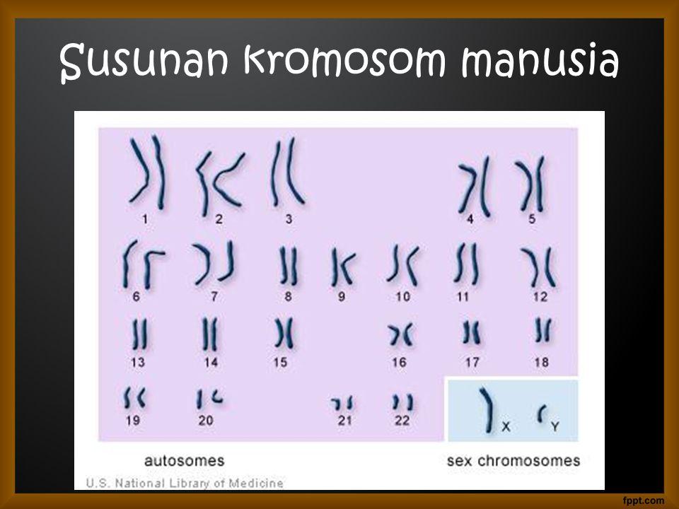 Susunan kromosom manusia