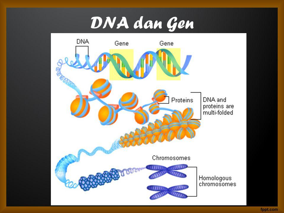 DNA dan Gen