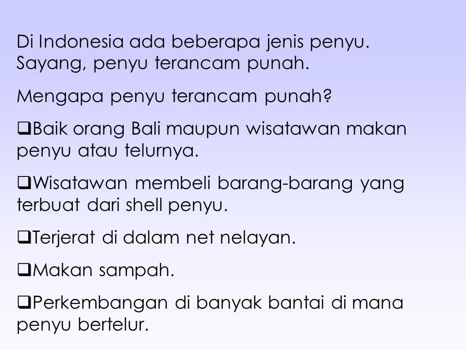 Di Indonesia ada beberapa jenis penyu. Sayang, penyu terancam punah. Mengapa penyu terancam punah?  Baik orang Bali maupun wisatawan makan penyu atau