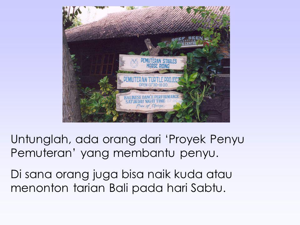 Untunglah, ada orang dari 'Proyek Penyu Pemuteran' yang membantu penyu. Di sana orang juga bisa naik kuda atau menonton tarian Bali pada hari Sabtu.
