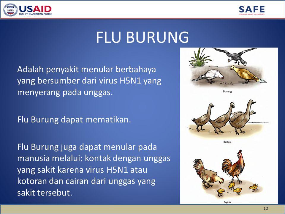 Adalah penyakit menular berbahaya yang bersumber dari virus H5N1 yang menyerang pada unggas. Flu Burung dapat mematikan. Flu Burung juga dapat menular