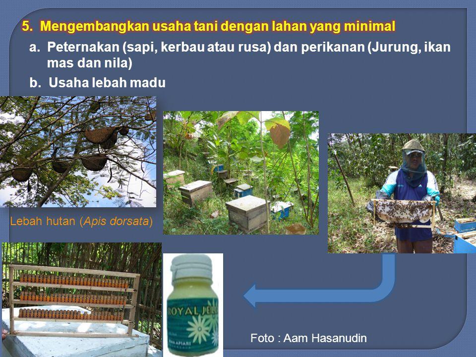 a.Peternakan (sapi, kerbau atau rusa) dan perikanan (Jurung, ikan mas dan nila) b. Usaha lebah madu Lebah hutan (Apis dorsata) Foto : Aam Hasanudin