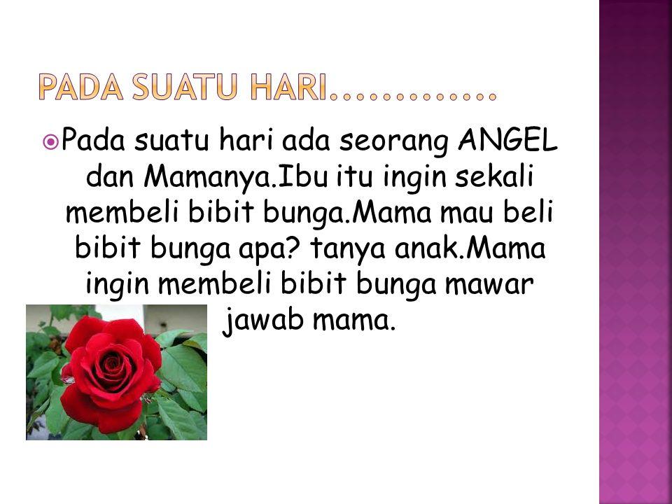  Pada suatu hari ada seorang ANGEL dan Mamanya.Ibu itu ingin sekali membeli bibit bunga.Mama mau beli bibit bunga apa.