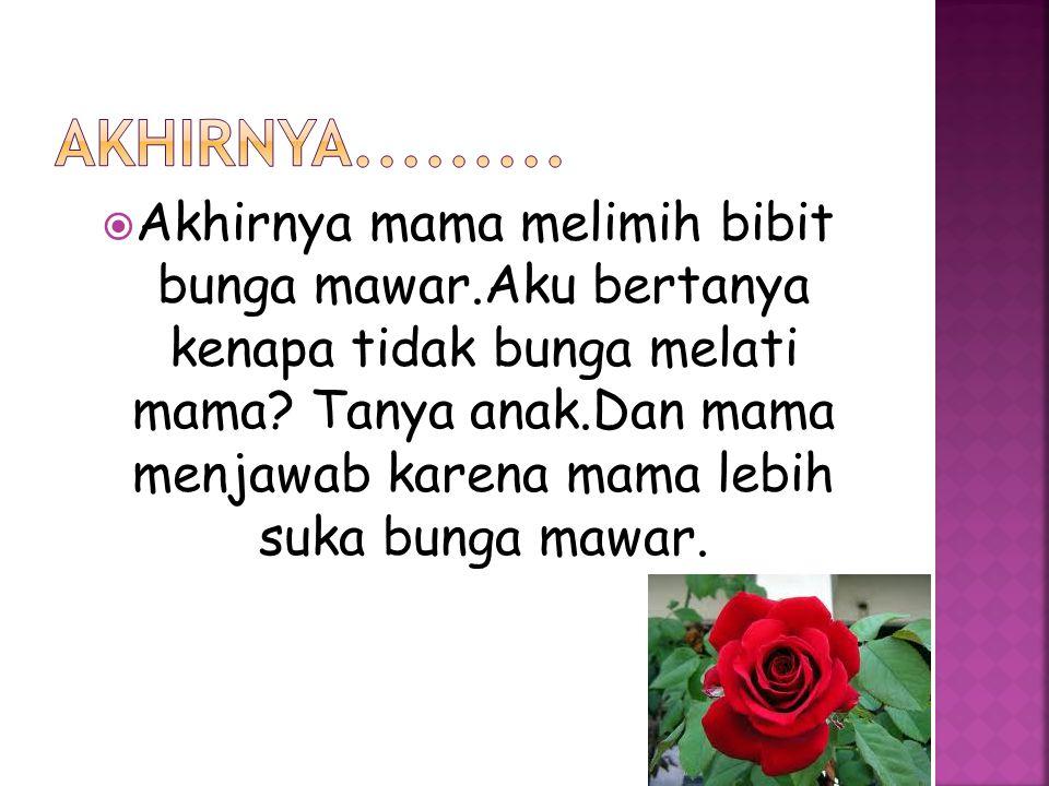  Akhirnya mama melimih bibit bunga mawar.Aku bertanya kenapa tidak bunga melati mama.