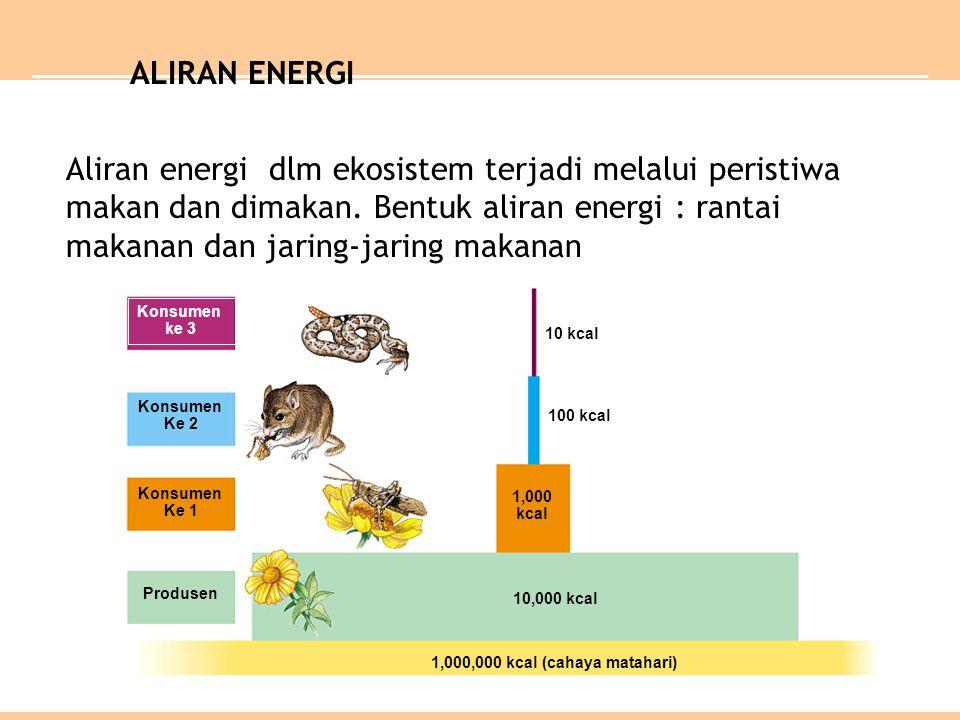 Konsumen ke 3 Konsumen Ke 2 Konsumen Ke 1 Produsen 10 kcal 100 kcal 1,000 kcal 10,000 kcal 1,000,000 kcal (cahaya matahari) ALIRAN ENERGI Aliran energ