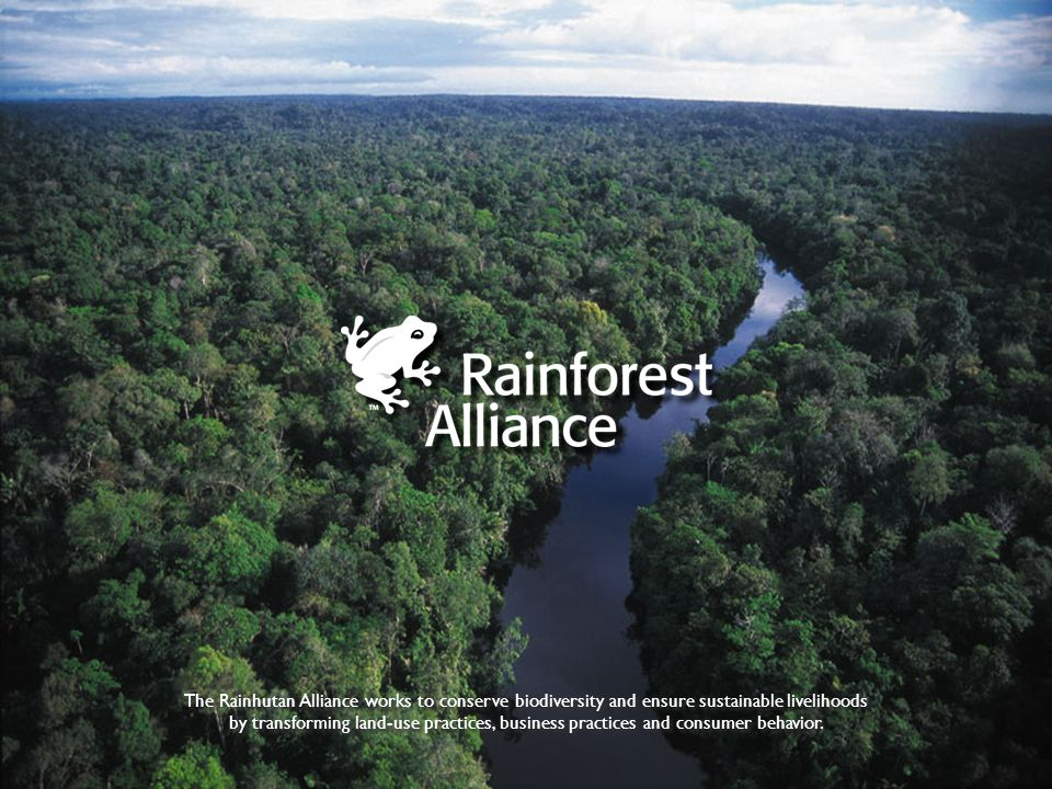 The Rainhutan Alliance works to conserve biodiversity and ensure sustainable livelihoods by transforming land-use practices, business practices and consumer behavior.