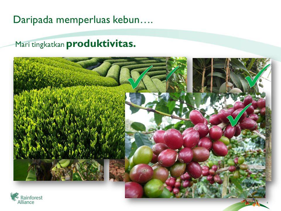 4 Daripada memperluas kebun…. Mari tingkatkan produktivitas.