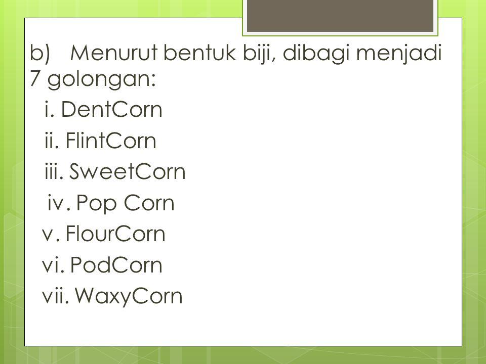b) Menurut bentuk biji, dibagi menjadi 7 golongan: i. DentCorn ii. FlintCorn iii. SweetCorn iv. Pop Corn v. FlourCorn vi. PodCorn vii. WaxyCorn