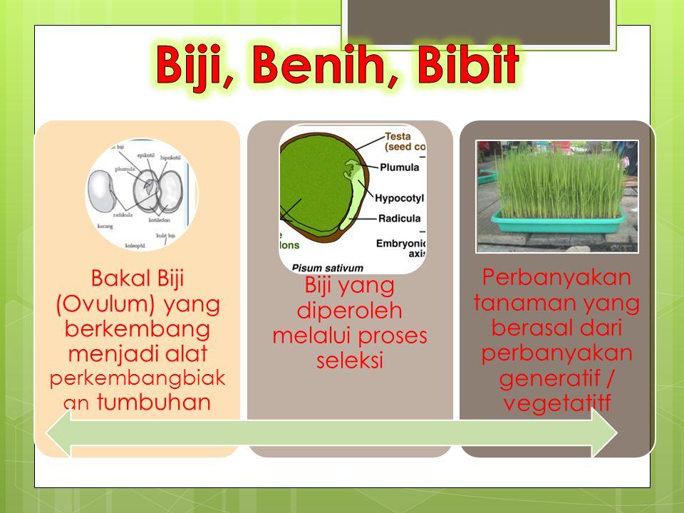Bakal Biji (Ovulum) yang berkembang menjadi alat perkembangbiak an tumbuhan Biji yang diperoleh melalui proses seleksi Perbanyakan tanaman yang berasa