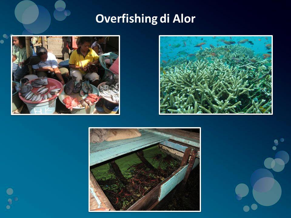 Overfishing di Alor