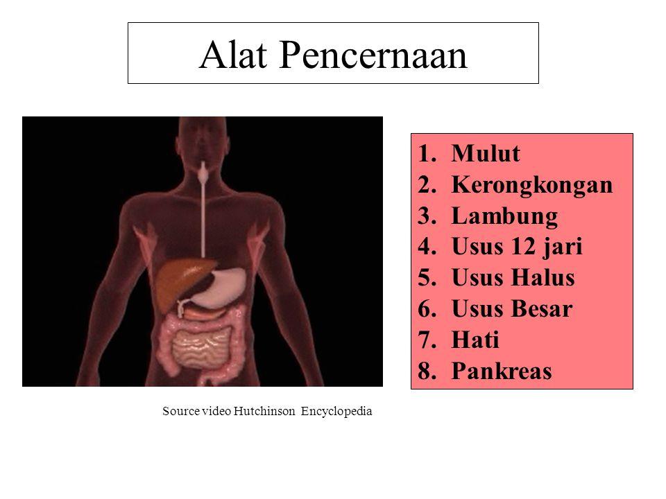 Alat Pencernaan 1.Mulut 2.Kerongkongan 3.Lambung 4.Usus 12 jari 5.Usus Halus 6.Usus Besar 7.Hati 8.Pankreas Source video Hutchinson Encyclopedia