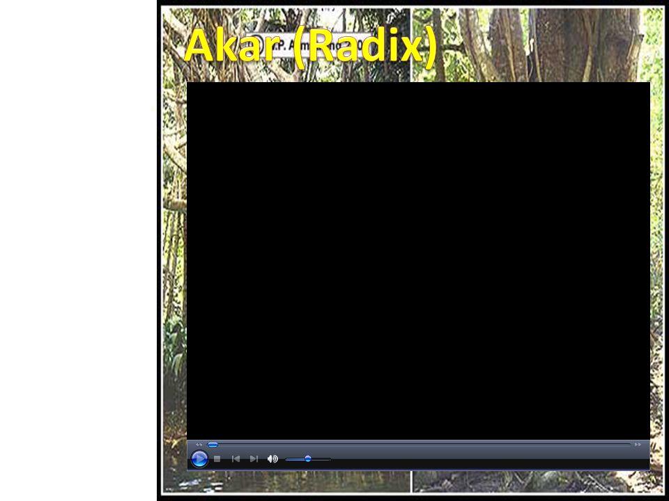 Simulasi Video Soal Profil Materi SK / KD