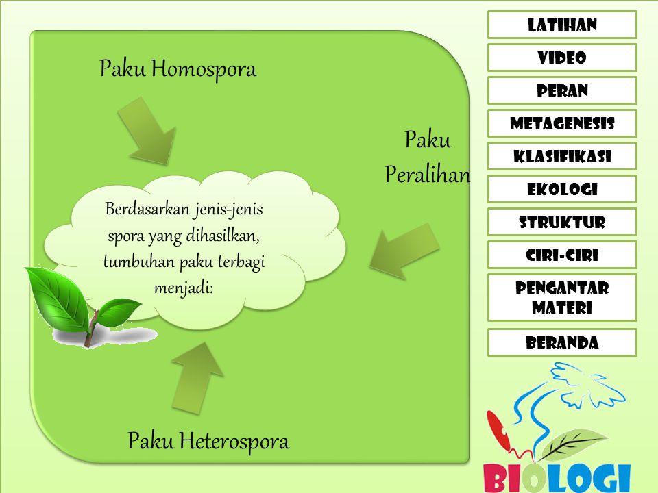 CIRI-CIRI LATIHAN VIDEO peran metagenesis klasifikasi EKOLOGI STRUKTUR PENGANTAR MATERI BERANDA Berdasarkan jenis-jenis spora yang dihasilkan, tumbuhan paku terbagi menjadi: Paku Homospora Paku Peralihan Paku Heterospora