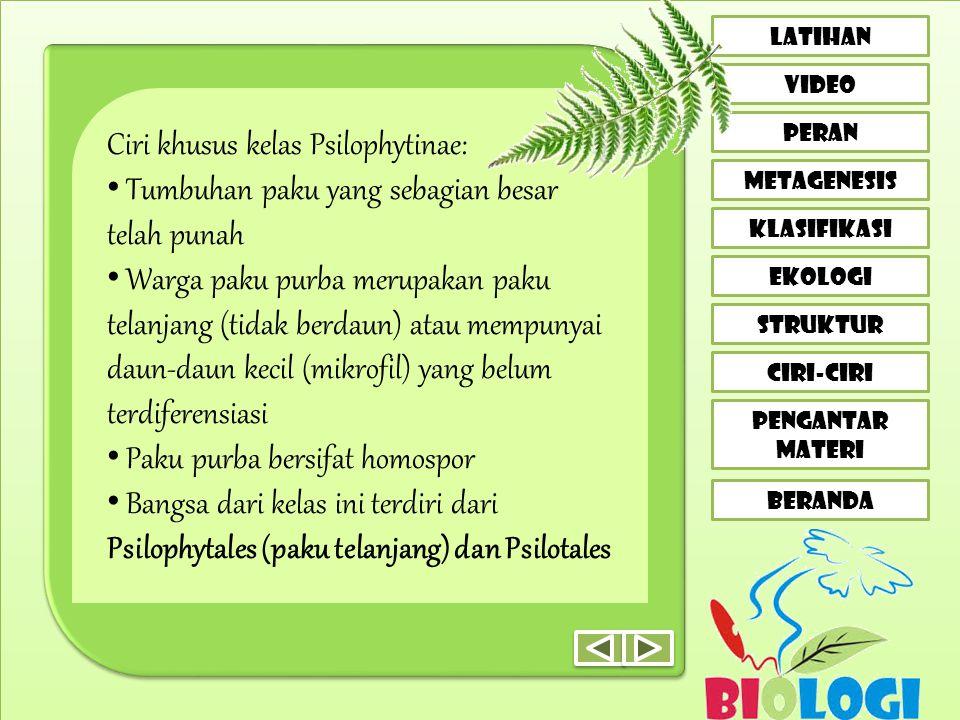 CIRI-CIRI LATIHAN VIDEO peran metagenesis klasifikasi EKOLOGI STRUKTUR PENGANTAR MATERI BERANDA Ciri khusus kelas Psilophytinae: • Tumbuhan paku yang sebagian besar telah punah • Warga paku purba merupakan paku telanjang (tidak berdaun) atau mempunyai daun-daun kecil (mikrofil) yang belum terdiferensiasi • Paku purba bersifat homospor • Bangsa dari kelas ini terdiri dari Psilophytales (paku telanjang) dan Psilotales