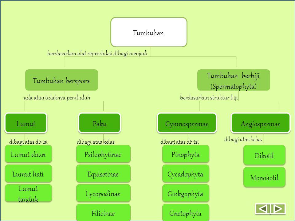 CIRI-CIRI LATIHAN VIDEO peran metagenesis klasifikasi EKOLOGI STRUKTUR PENGANTAR MATERI BERANDA Tumbuhan Tumbuhan berspora Tumbuhan berbiji (Spermatophyta) berdasarkan alat reproduksi dibagi menjadi Lumut Paku ada atau tidaknya pembuluh Lumut daun Lumut tanduk Lumut hati dibagi atas divisi Psilophytinae Equisetinae Lycopodinae Filicinae berdasarkan struktur biji dibagi atas divisi dibagi atas kelas Gymnospermae Angiospermae Pinophyta Gnetophyta Ginkgophyta Cycadophyta Monokotil Dikotil dibagi atas kelas