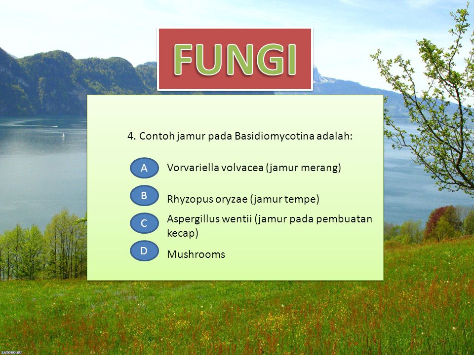 4. Contoh jamur pada Basidiomycotina adalah: A B C D Vorvariella volvacea (jamur merang) Aspergillus wentii (jamur pada pembuatan kecap) Mushrooms Rhy