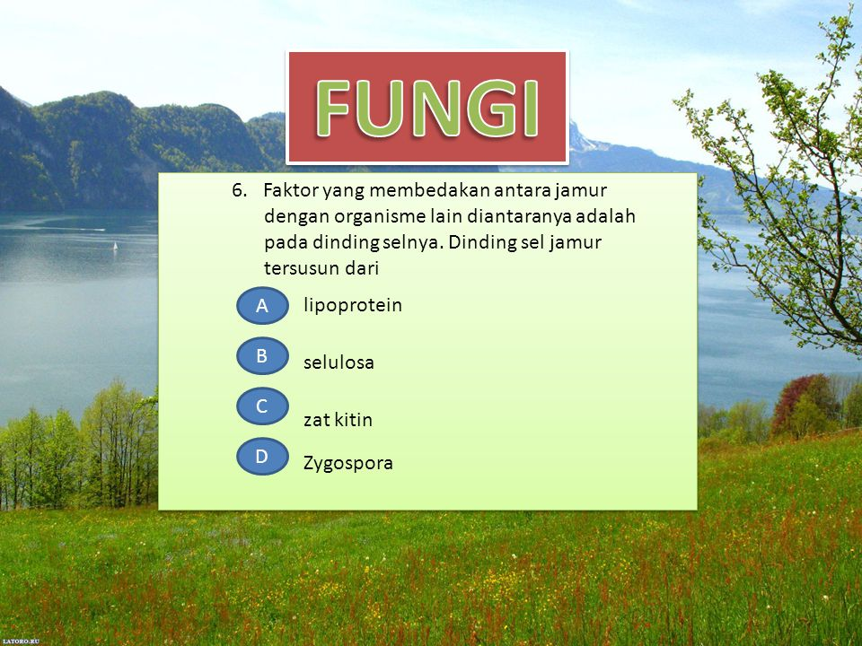 6. Faktor yang membedakan antara jamur dengan organisme lain diantaranya adalah pada dinding selnya. Dinding sel jamur tersusun dari A B C D lipoprote