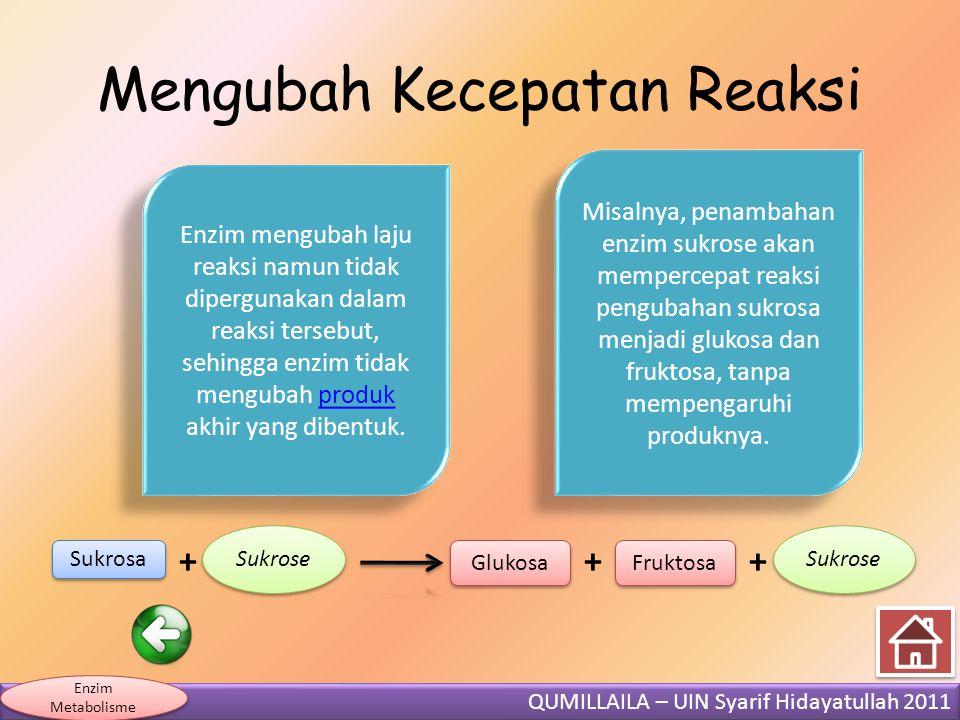 QUMILLAILA – UIN Syarif Hidayatullah 2011 Enzim Metabolisme Mengubah Kecepatan Reaksi Sukrosa + Sukrose Glukosa + Fruktosa Sukrose + Enzim mengubah la