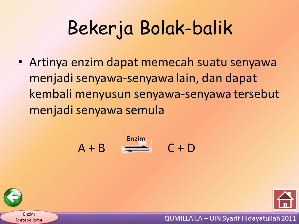 QUMILLAILA – UIN Syarif Hidayatullah 2011 Enzim Metabolisme Bekerja Bolak-balik • Artinya enzim dapat memecah suatu senyawa menjadi senyawa-senyawa lain, dan dapat kembali menyusun senyawa-senyawa tersebut menjadi senyawa semula A + B C + D Enzim