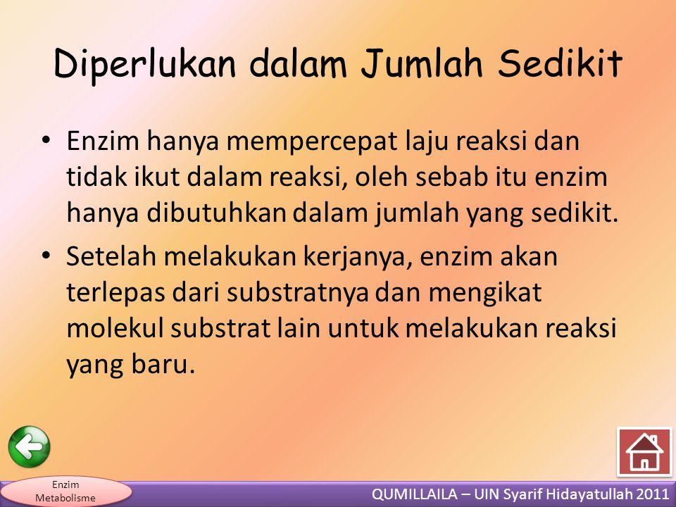 QUMILLAILA – UIN Syarif Hidayatullah 2011 Enzim Metabolisme Diperlukan dalam Jumlah Sedikit • Enzim hanya mempercepat laju reaksi dan tidak ikut dalam