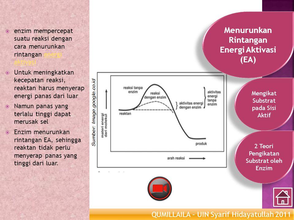 QUMILLAILA – UIN Syarif Hidayatullah 2011 Enzim Metabolisme  enzim mempercepat suatu reaksi dengan cara menurunkan rintangan energi aktivasienergi ak